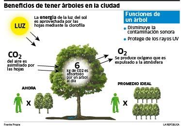 Cu nto ox geno produce un rbol for Cuanto miden los arboles