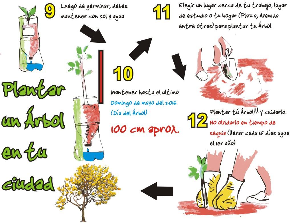 diagrama germinación fondo blanco 1