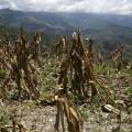 Cambio climático en Venezuela