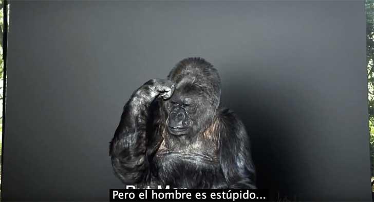 koko mensaje gorila